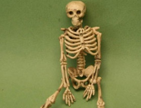 Sınıftaki iskelet gerçek çıktı