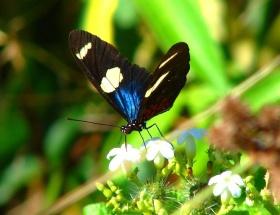 Kelebek şekil değiştirerek kurtuluyor