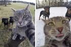 Selfie Çekmeyi Öğrenip İnternet Fenomeni Olan Kedi