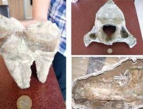 En büyük memeli fosilleri Ankarada