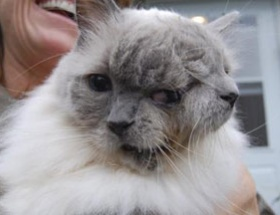 Bu da 2 yüzlü kedi