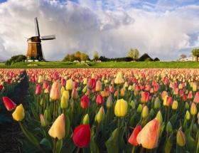 Hollandaya Polonyalı ilgisi