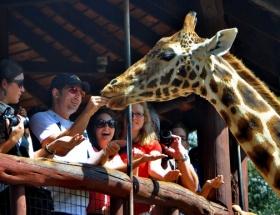 Zürafa besliyorlar