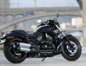 Papaya son model Harley