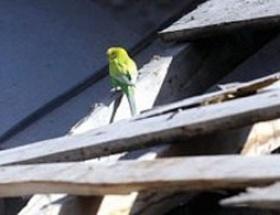 Enkazdaki muhabbet kuşunun sırrı