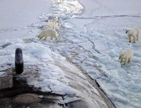 Kutup ayılarının göçü canlı yayında