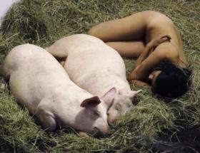 Şimdi de domuzlara soyundu
