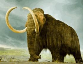Bilimadamları mamut klonlayacak