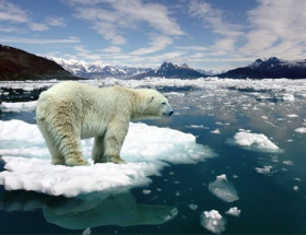 Kuzey Kutbunda ürküten manzara