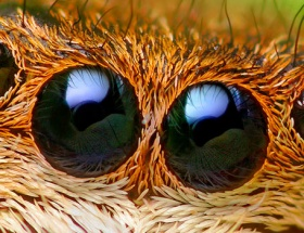 Tayvanlının kulağından uyuz böceği çıktı