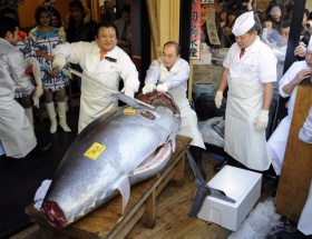 Tek bir balığa 1.4 milyon TL