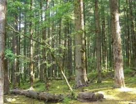 Orman yetiştirme tebliği değişiyor