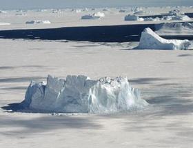 Antarktikada kaçak tohum tehdidi