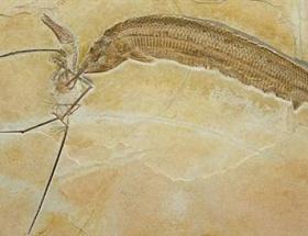 120 milyon yıllık kavga