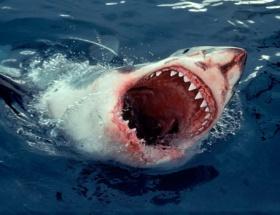 Marmarada 5 köpek balığı yakalandı