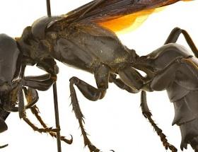 Sivasta arı dehşeti