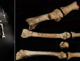 İnsandan 3 milyon yıl önce yürüyorlardı
