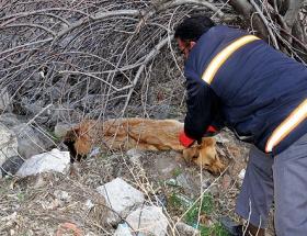 Mudanyada sokak köpekleri zehirlendi