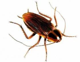 Hamam böceğinden elektrik