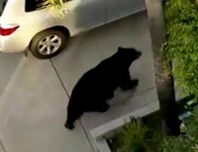 Sokakta ayı sürprizi