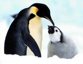 Antarktikada sanılandan fazlalar