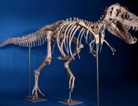 Evinde dinozor iskeleti bulundu