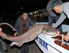 Ege Denizi Jaws kaynıyor