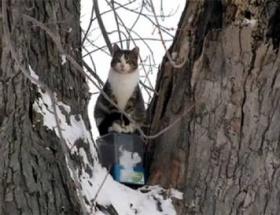 Tarzan kedi !