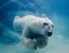 Kuzey Buz Denizi eriyebilir