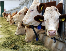 Hayvancılığa 2,5 milyar lira destek