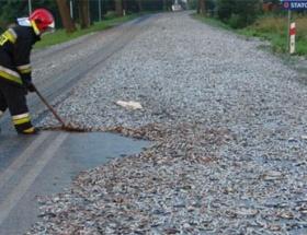 24 ton sardalya yola döküldü