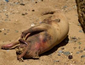 Sahile vuran gizemli yaratık!
