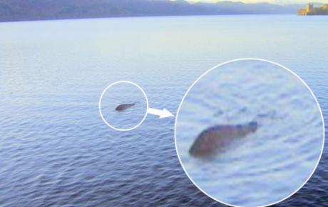 Yoksa Loch Ness canavarı bu mu?