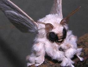 Esrarengiz böceğin sırrı