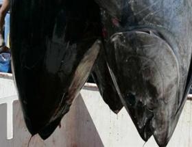 Balıklarda rekor radyasyon