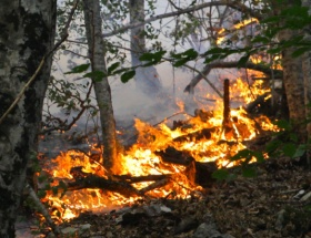 Datçada 50 hektar kül oldu