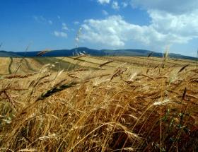 Tarımsal üretimde kuraklık endişesi