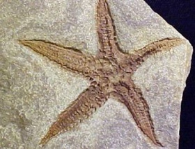 Çantasından 60 milyon yıllık fosil çıktı