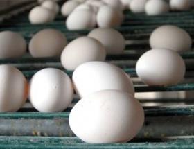 Bakkallar yumurta satamayacak