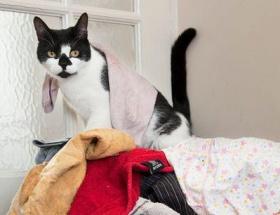 Hırsız kedi komşuların kabusu oldu