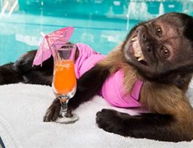 Hollywoodun en zengin maymunu