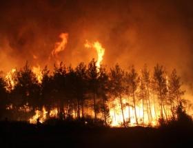 Giresun Espiyede orman yangını