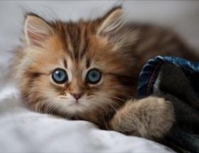 Dünyanın en tatlı kedisiyle tanışın