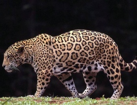 Nesli tükenmekte olan hayvanları klonlayacaklar