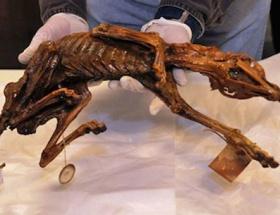 1000 yıllık köpek mumyası