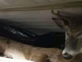 Buzdolabından ölü geyik çıktı