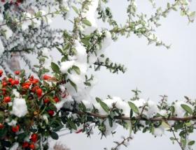 Domates ve kar yiyerek hayatta kaldı