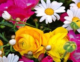 Çiçekler bu yüzden güzel kokuyor