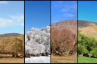 Aynı karede dört mevsim