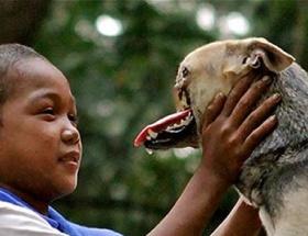 Kahraman köpek kanseri de yendi